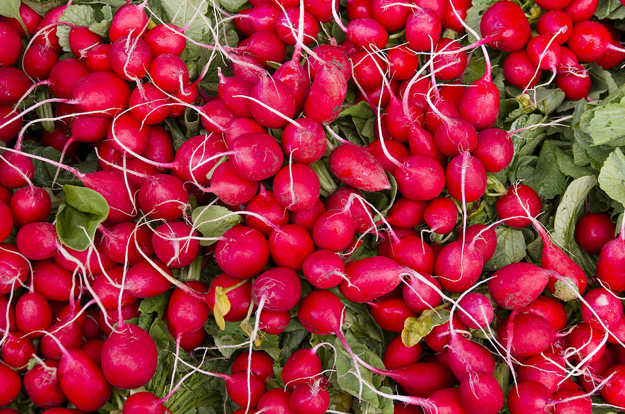 Agriculture Photograph - Fresh Red Radishes by John Trax