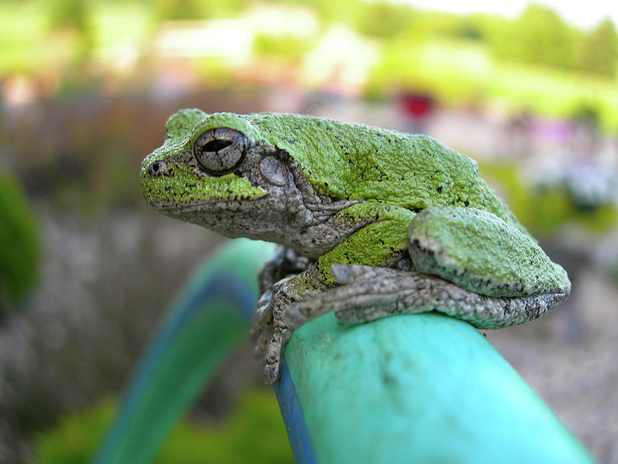 Frogs Photograph - Frog Watering Plants by Randy Rosenberger