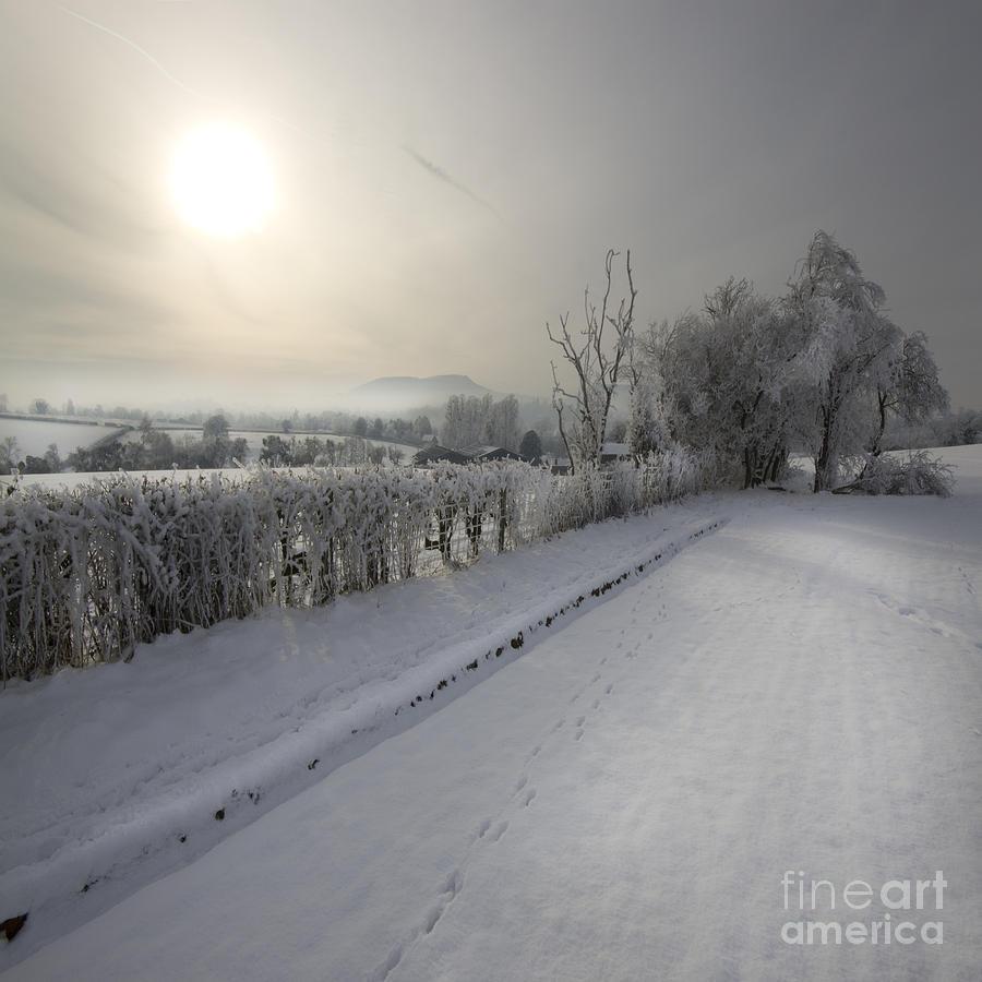 Winter Photograph - Frozen Britain by Angel  Tarantella
