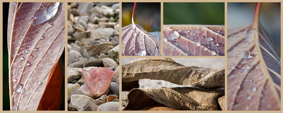 Lisa Knechtel Photograph - Frozen Dew by Lisa Knechtel