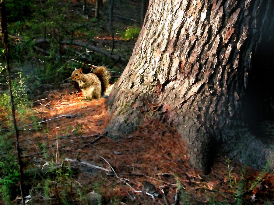 Squirrel Painting - Furry Neighbor by Paul Sachtleben