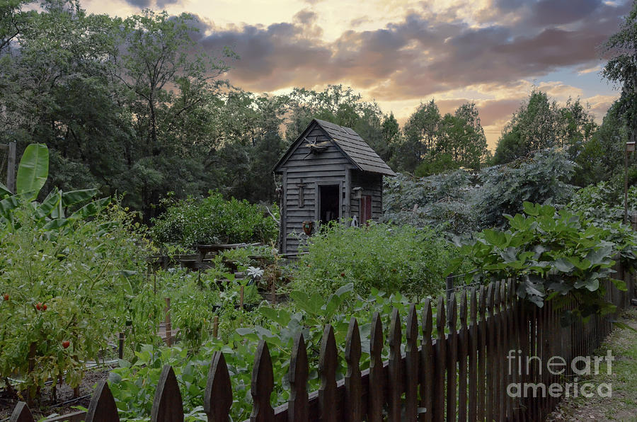 Garden And Shed Photograph