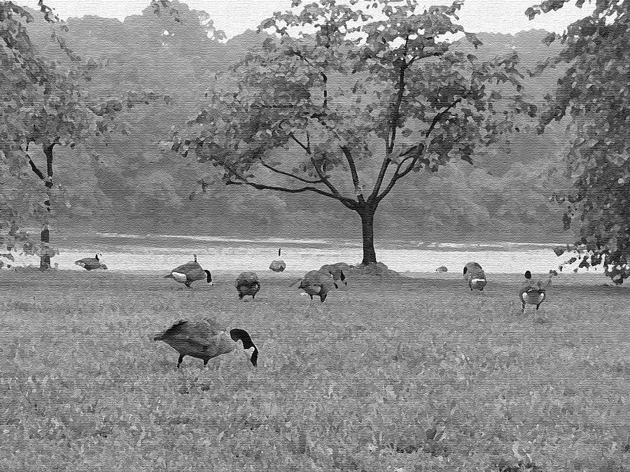 Geese On A Rainy Day Photograph
