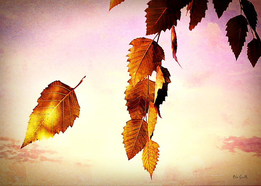 Fall Photograph - Gently September by Bob Orsillo