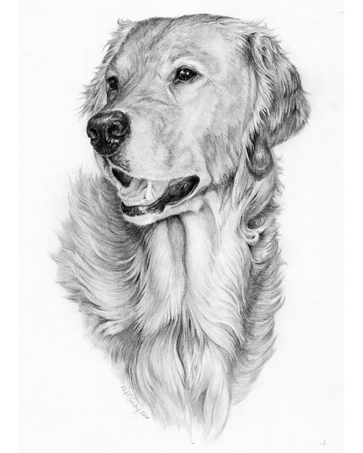 Dog Drawing - Ginger by Laurie McGinley