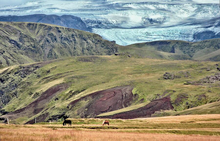 Scenic Photograph - Glacier Mountains Meadows Horses by David Halperin