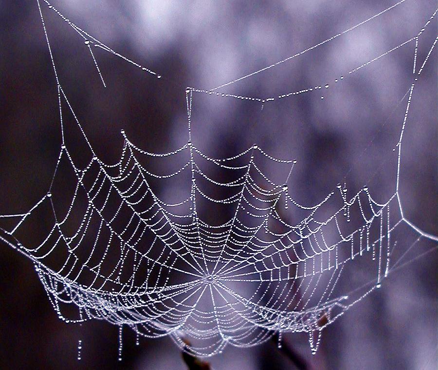 Web Photograph - Glistening Web by Karol Livote