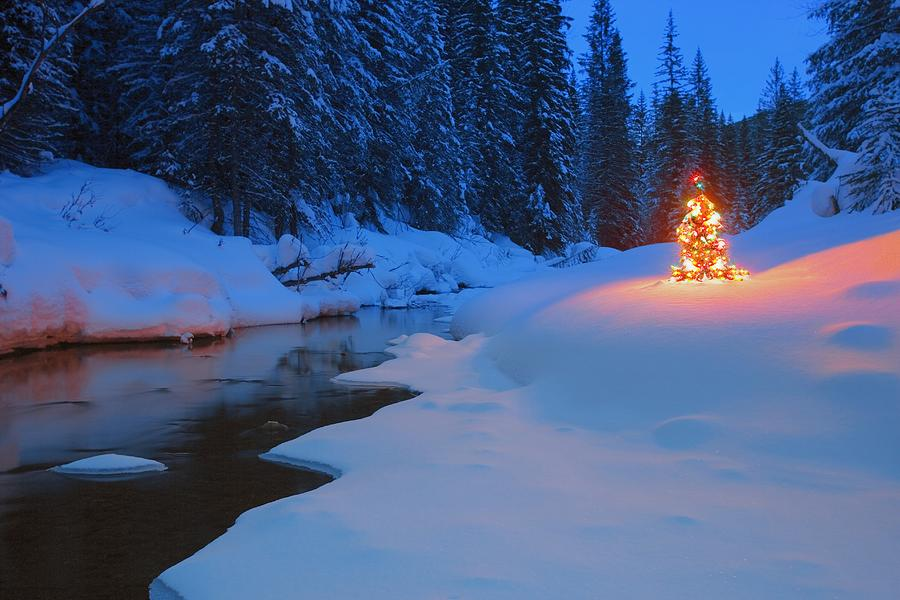 Glowing Christmas Tree By Mountain Photograph