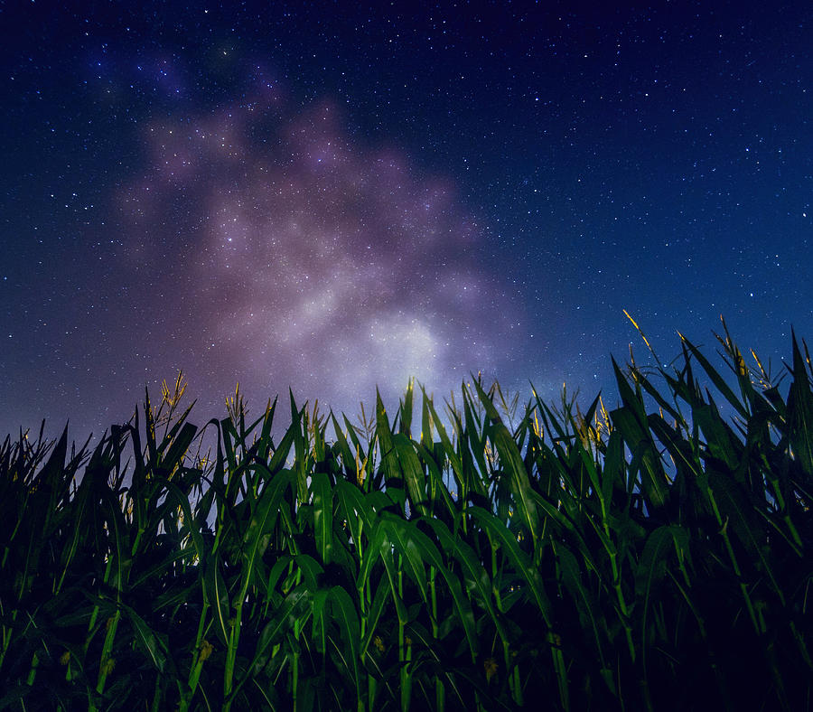 Glowing Milky Way Over Corn Field Photograph