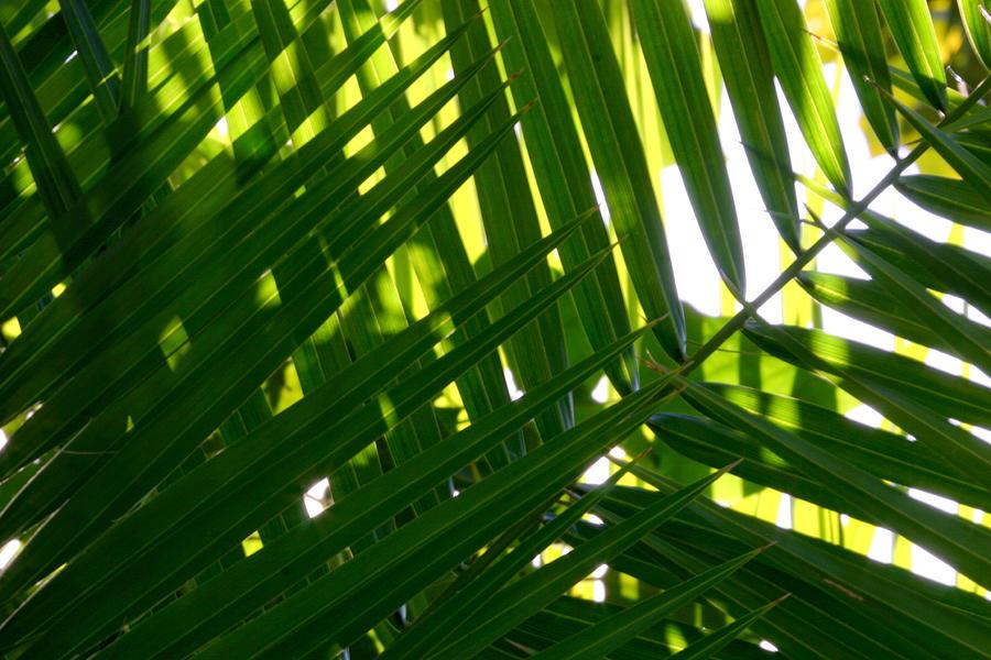 Landscape Photograph - Going Green by Brad Scott