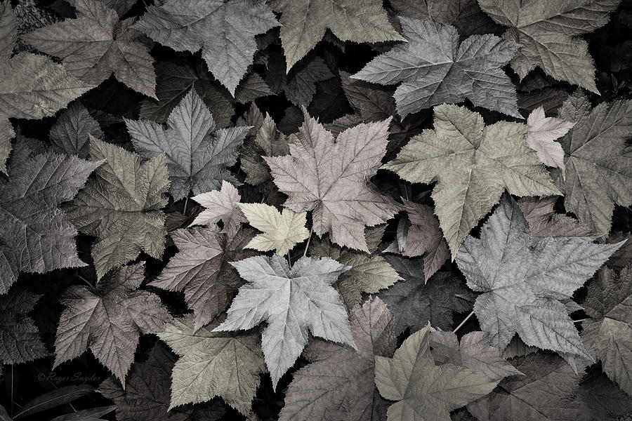 Beautiful Photos Photograph - Gold Copper And Silver Leaves 1 by Roger Snyder