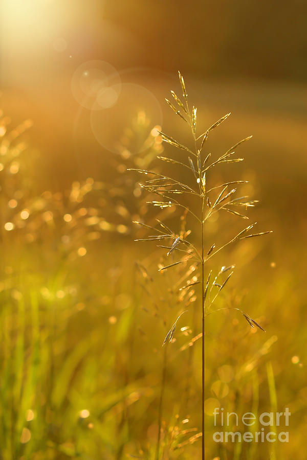 Afternoon Digital Art - Golden Glow by Sandra Cunningham