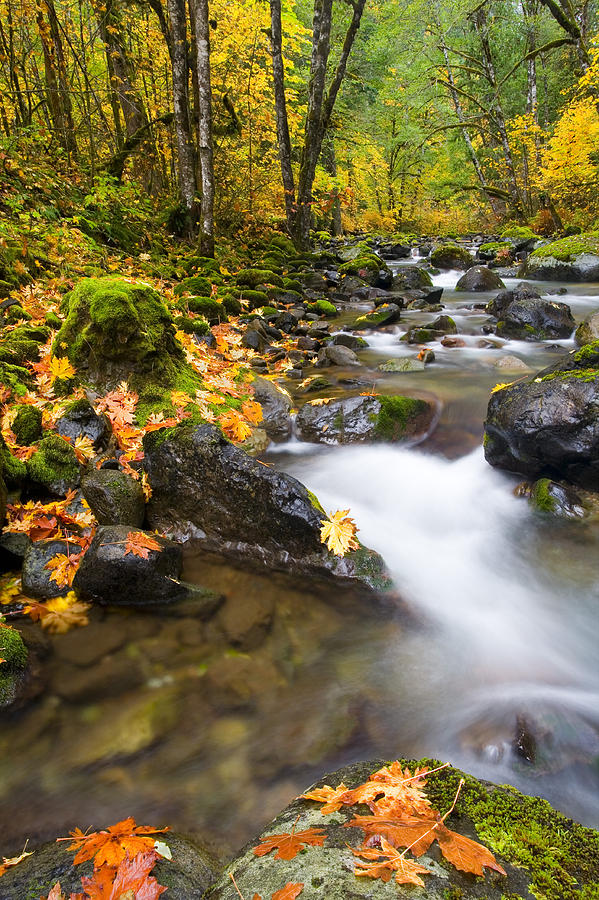 Fall Photograph - Golden Grove by Mike  Dawson