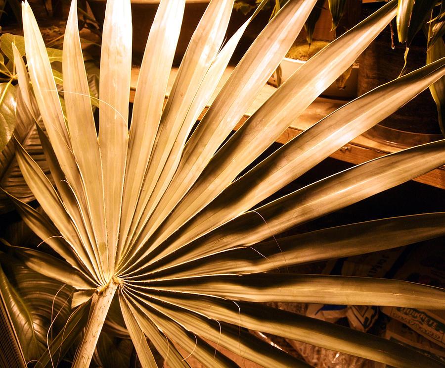 Palm Photograph - Golden Palm by Mindy Newman