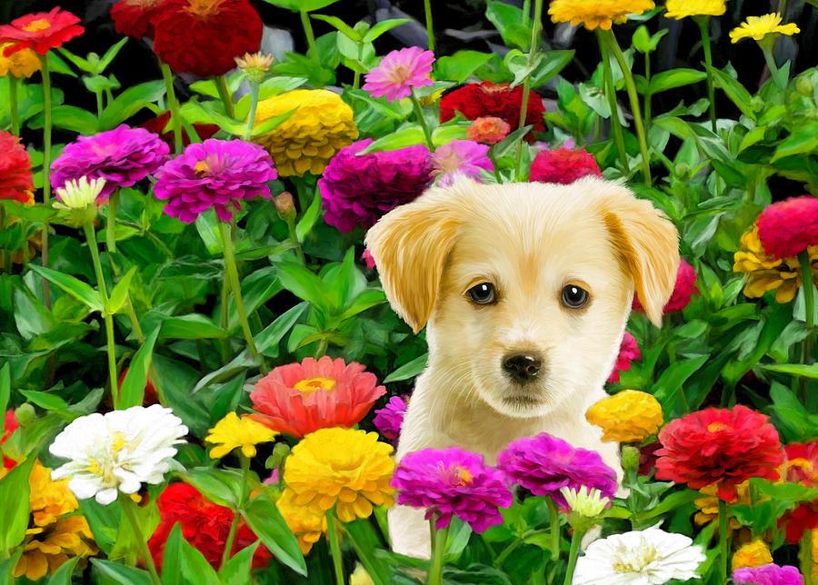 Golden Puppy In The Zinnias Digital Art