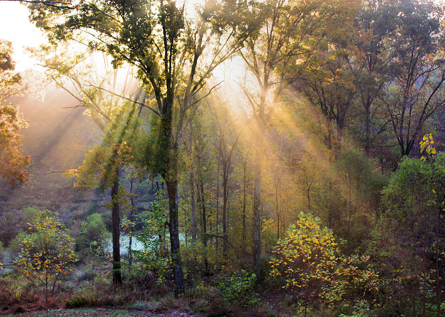 Sunshine Photograph - Golden Rays by Kristin Elmquist
