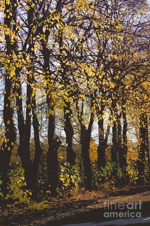 Golden Trees 1 Photograph
