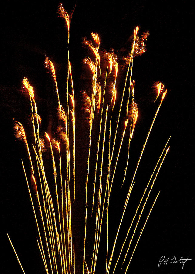 July 4th Photograph - Goldenrod by Phill Doherty