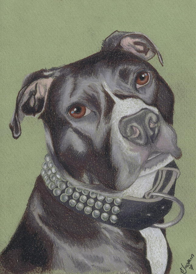 Pit Bull Drawing - Gonzo by Stacey Jasmin