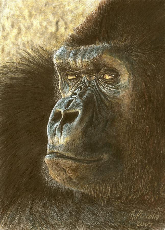 Gorilla Drawing - Gorilla by Marlene Piccolin