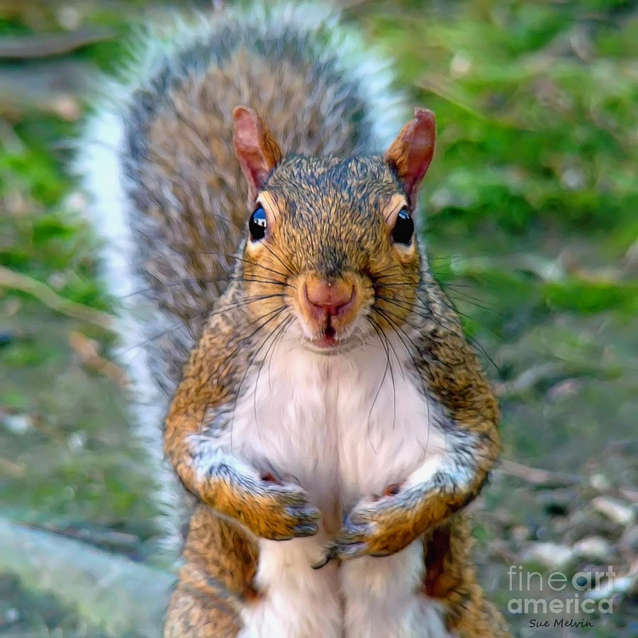 Squirrel Photograph - Got Any Peanuts by Sue Melvin