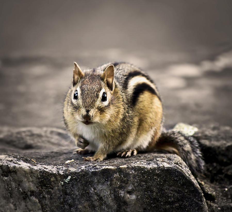Animal Photograph - Got Nuts by Evelina Kremsdorf