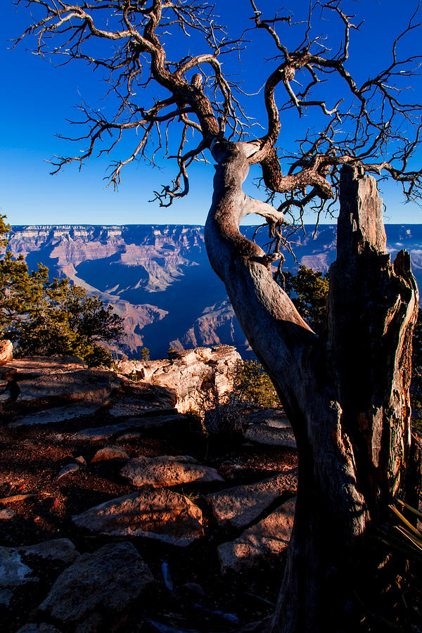 Grand Canyon 27 Photograph