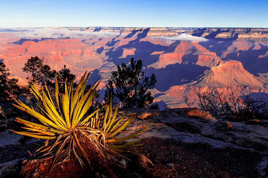 Grand Canyon 31 Photograph