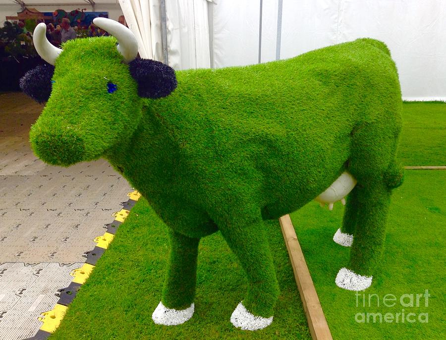 Grass Cow Photograph