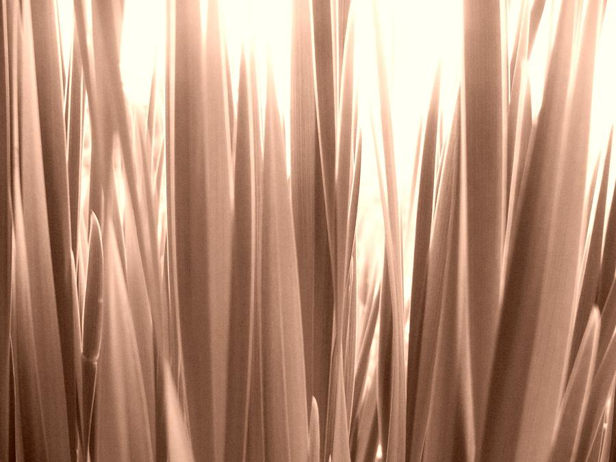 Abstract Photograph - Grass by Gonca Yengin