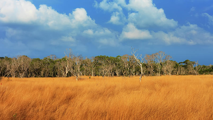 savanna grassland features Savanna explorer  all regions  landscapes and climate  landscapes the landscapes of australia's tropical savannas the victoria river region in the northern territory features savanna woodland, sandstone escarpments and black soil plains.