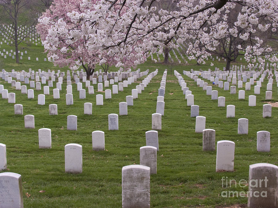 Arlington National Cemetery Photograph - Graves Of Heros In Arlington National Cemetery by Tim Grams