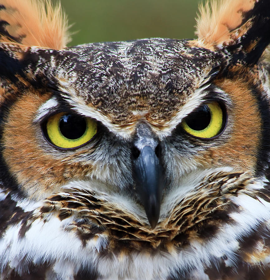 owls head mature women personals View photos of singles in redmond i am a: seeking a: between ages:.
