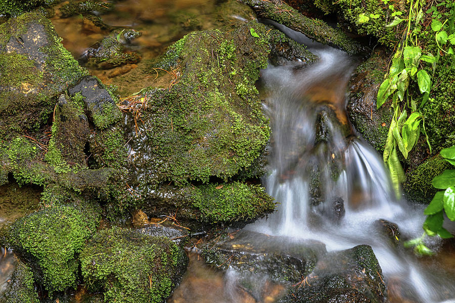 Green And Mossy Water Flow Photograph