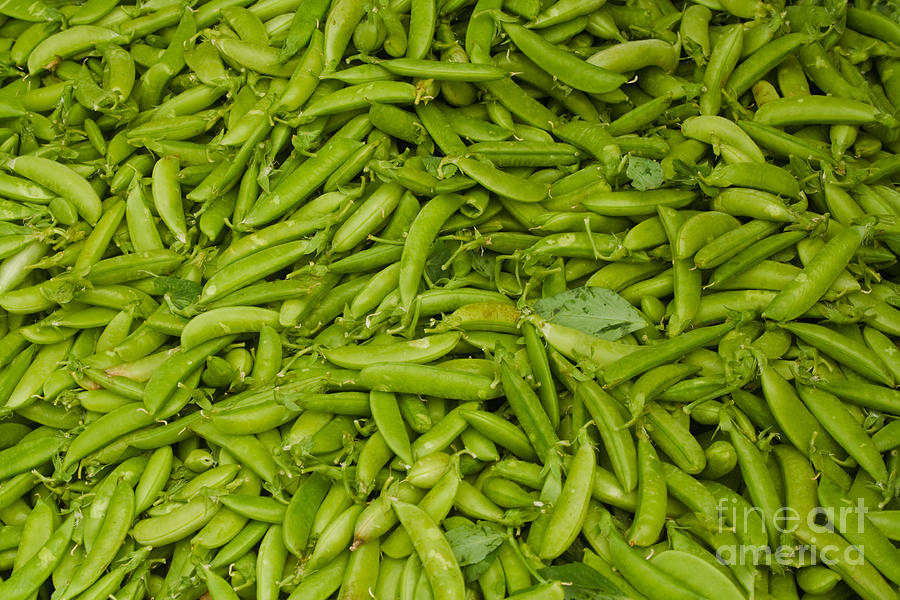 Green Photograph - Green Beans by Thomas Marchessault