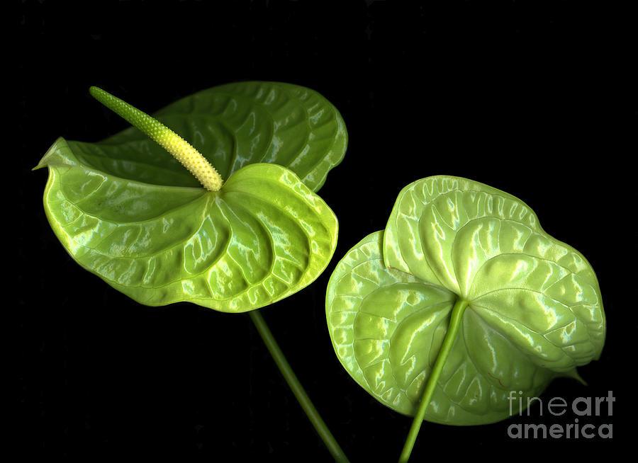 Botanicals Photograph - Green Berets by Christian Slanec