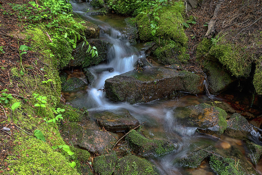 Green Flowing Stream Photograph