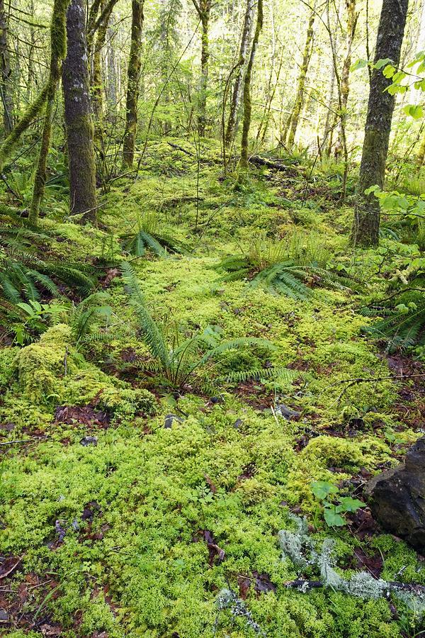 Floor Photograph - Green Foliage On The Forest Floor by Craig Tuttle