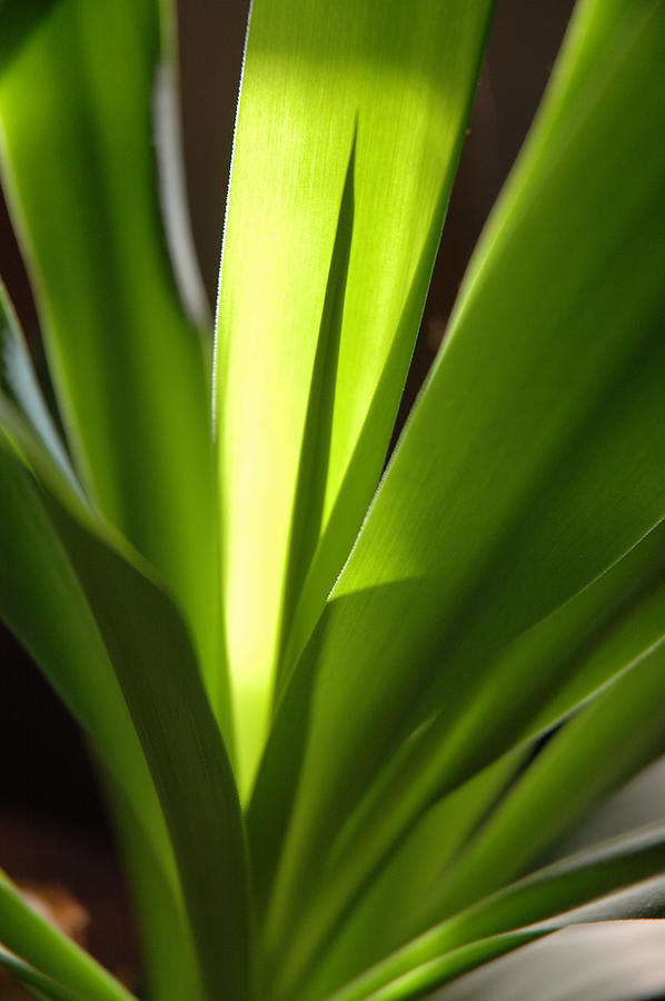 Green Photograph - Green Patterns by Jerry McElroy
