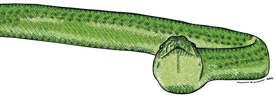 Drawing Drawing - Green Snake by Karl Addison