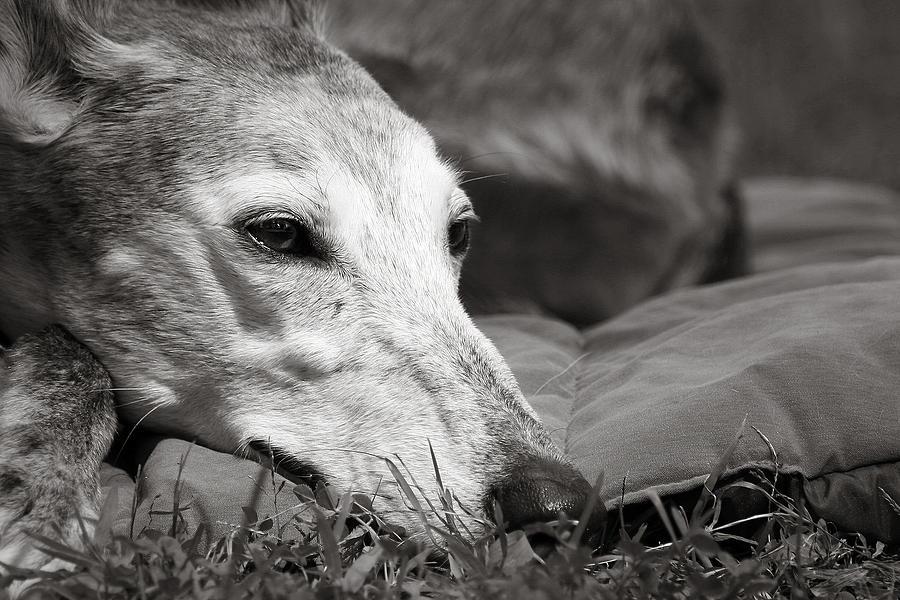 Editorial Photograph - Greyful by Angela Rath