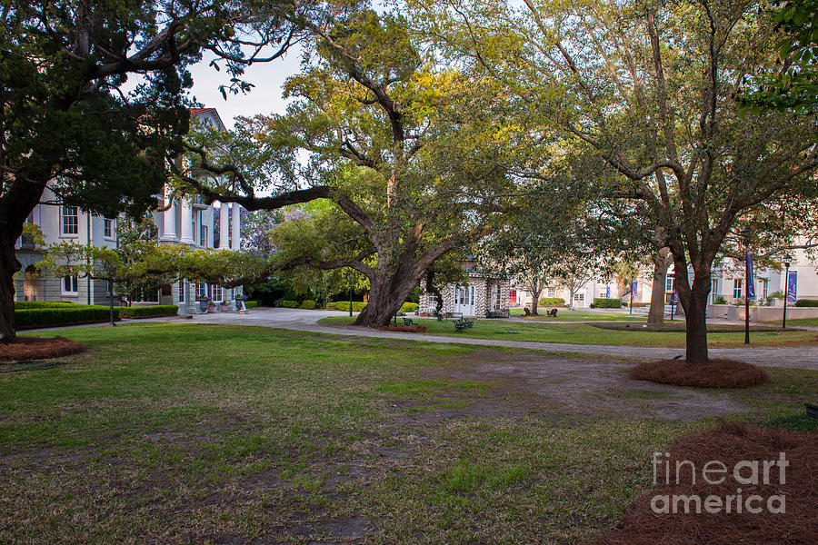 Grounds Of Ashley Hall School Photograph