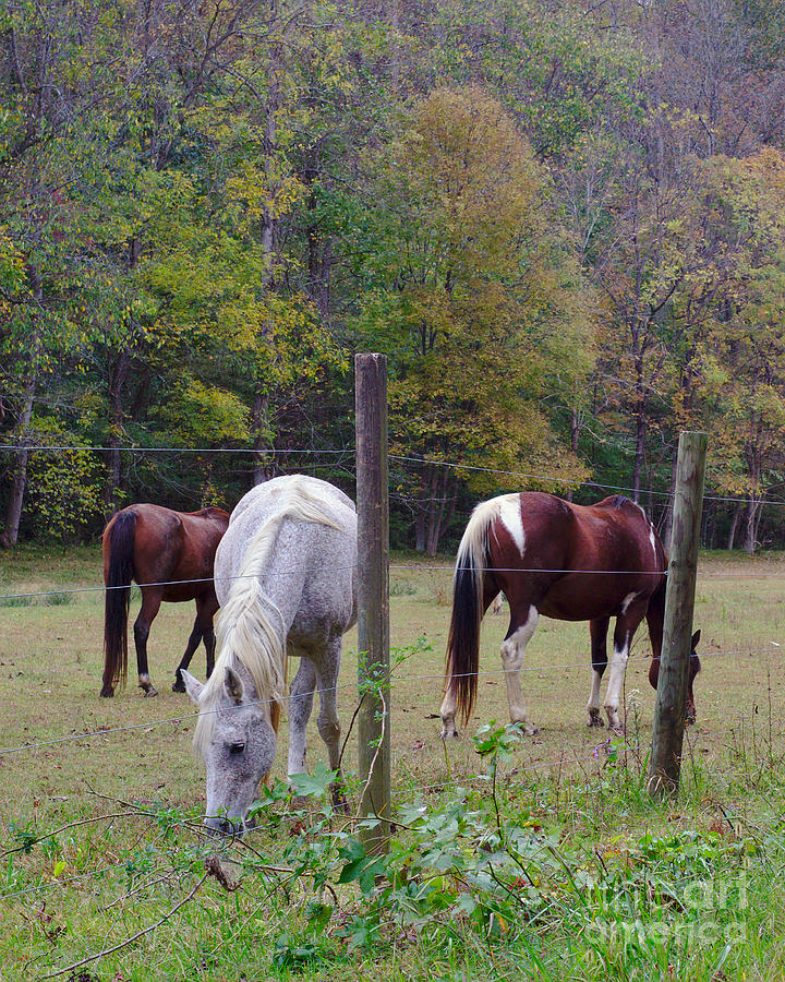 Group Of Horses In Pasture Photograph By MC Lewis