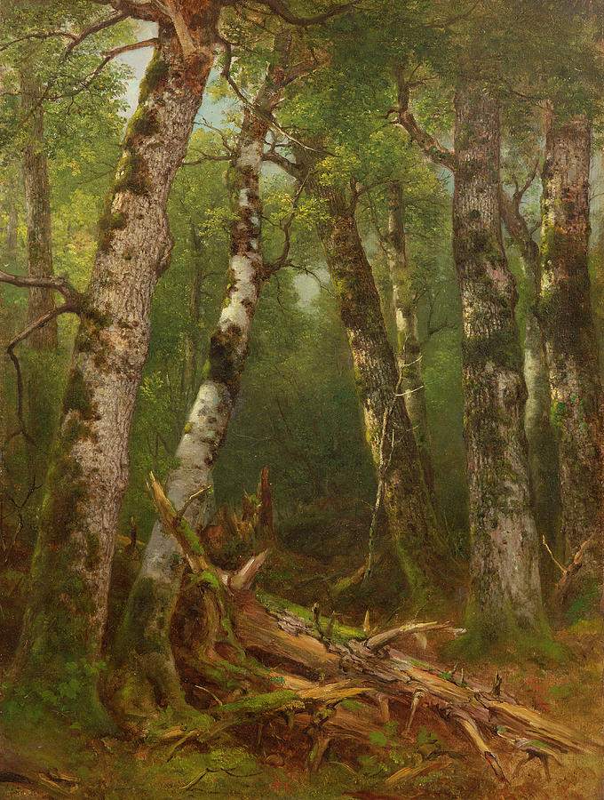 Woodland; Forest; Tree; Wood; Fallen; Birch; Romanticist; Romantic; Hudson River School; Bouleau; Bouleaux; Group Of Trees Painting - Group Of Trees by Asher Brown Durand