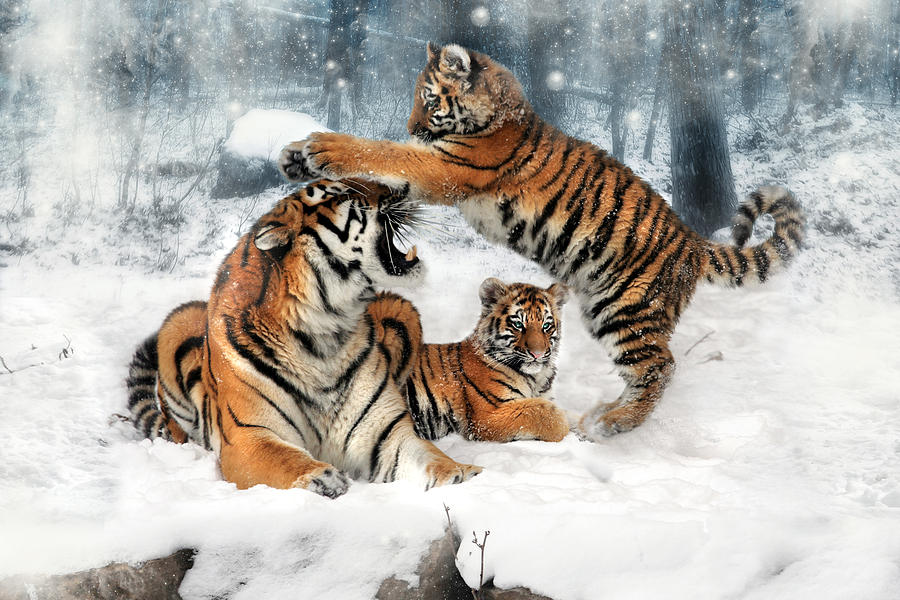 Tiger Digital Art - Group Therapy by Julie L Hoddinott