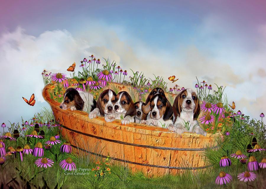 Beagle Puppies Mixed Media - Growing Puppies by Carol Cavalaris