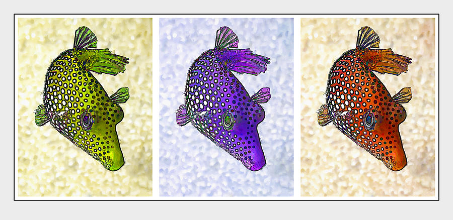 Nature Photograph - Guinea Fowl Puffer Fish Triptych by Bill Caldwell -        ABeautifulSky Photography