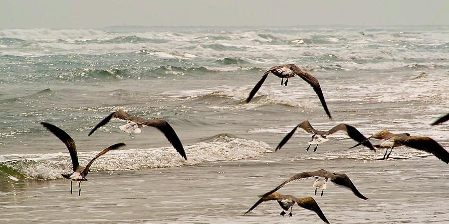 Birds Photograph - Gulf Gulls by Michael Flood