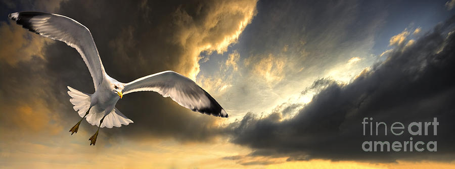 Gull Photograph - Gull With Approaching Storm by Meirion Matthias