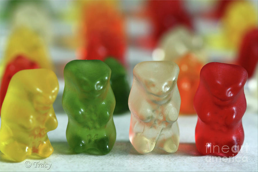 Gummy Photograph - Gummy Bear Meeting by Tracy  Hall